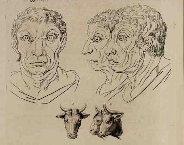 Goat faces in front and profile views with corresponding goat like human faces below